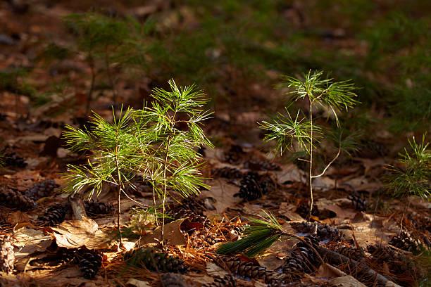 Baum saplings auf den Waldboden – Foto