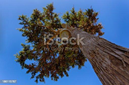 istock Tree seen from below 186115767