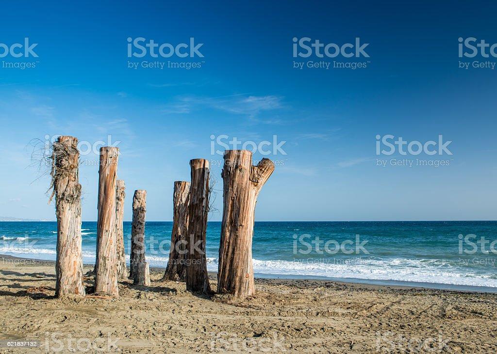 Tree Sentinels on a beach in Marbella, Spain stock photo