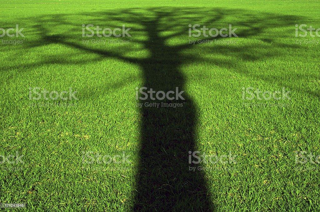Tree shadow 2 royalty-free stock photo