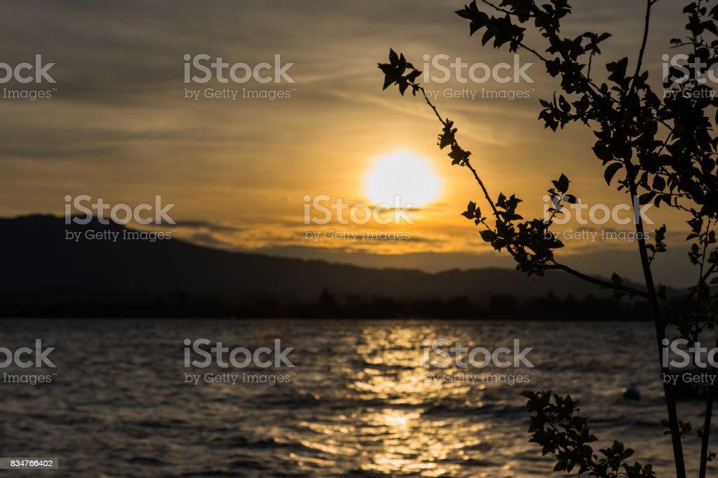 tree shadow at lake thun stock photo