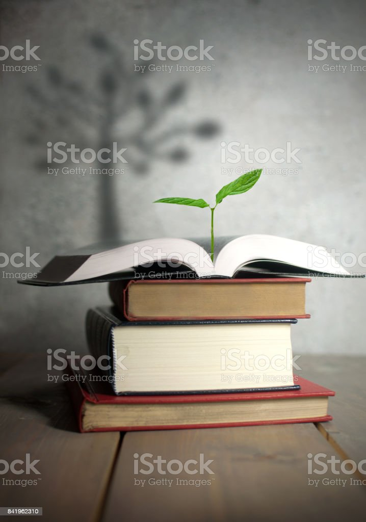 Tree shadow from new seedling in pile of books stock photo