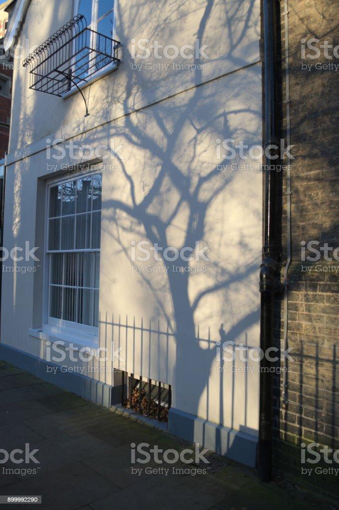 Tree shadow on bulding stock photo