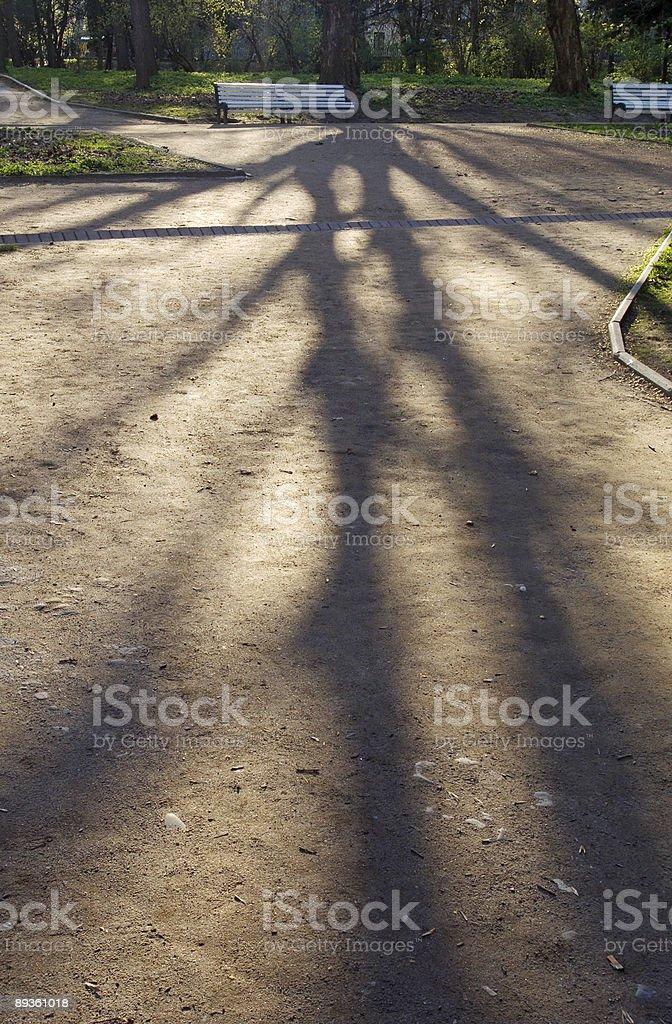 Tree shadow royalty free stockfoto