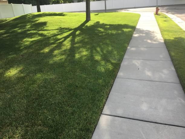 芝生の上の木の影 - 歩道 ストックフォトと画像