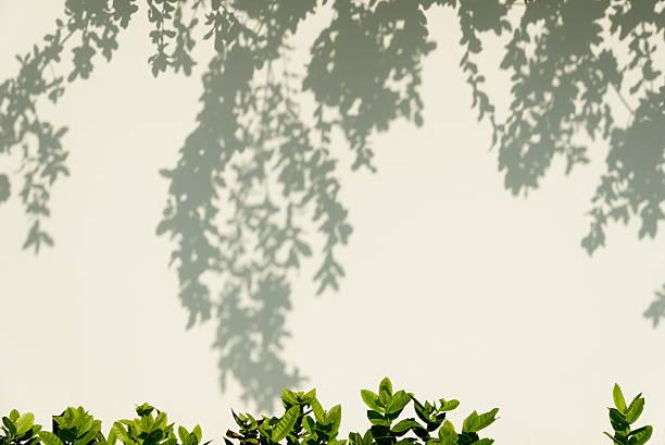 木の影を壁に映し出します。 ストックフォト