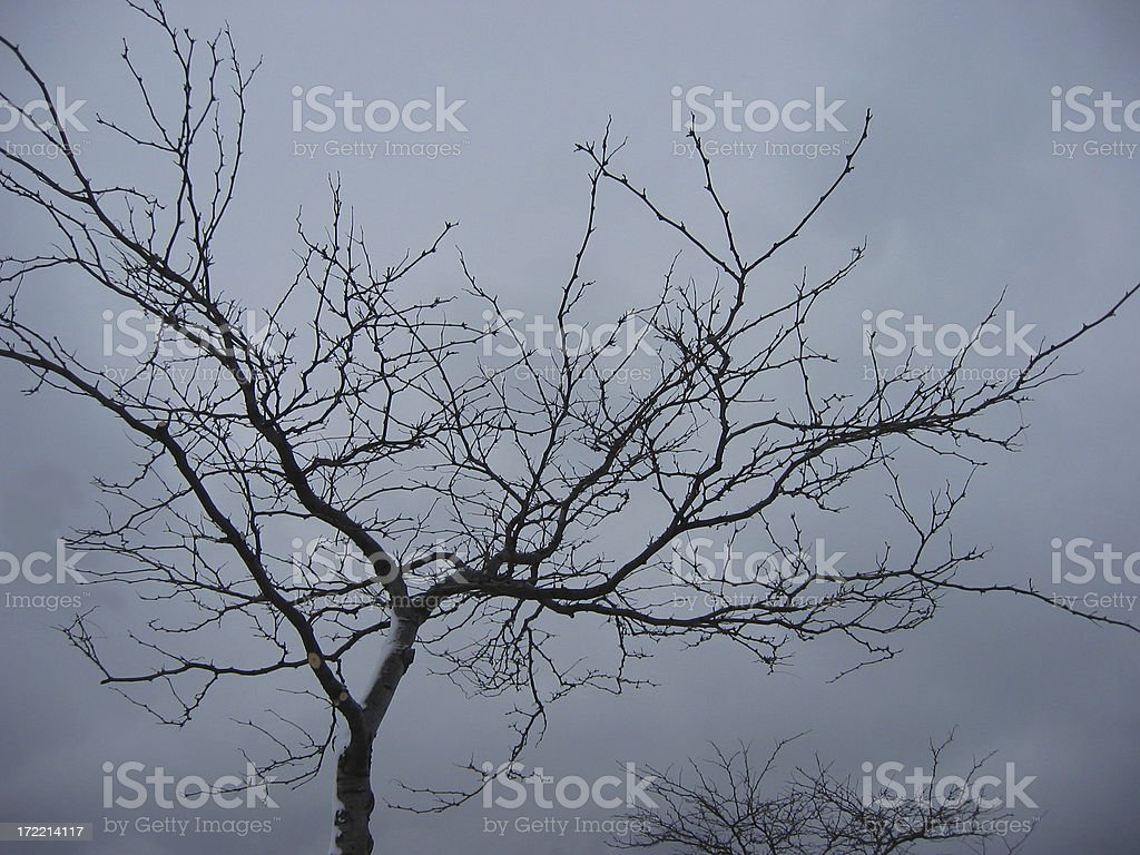 tree silhouette against grey royalty-free stock photo