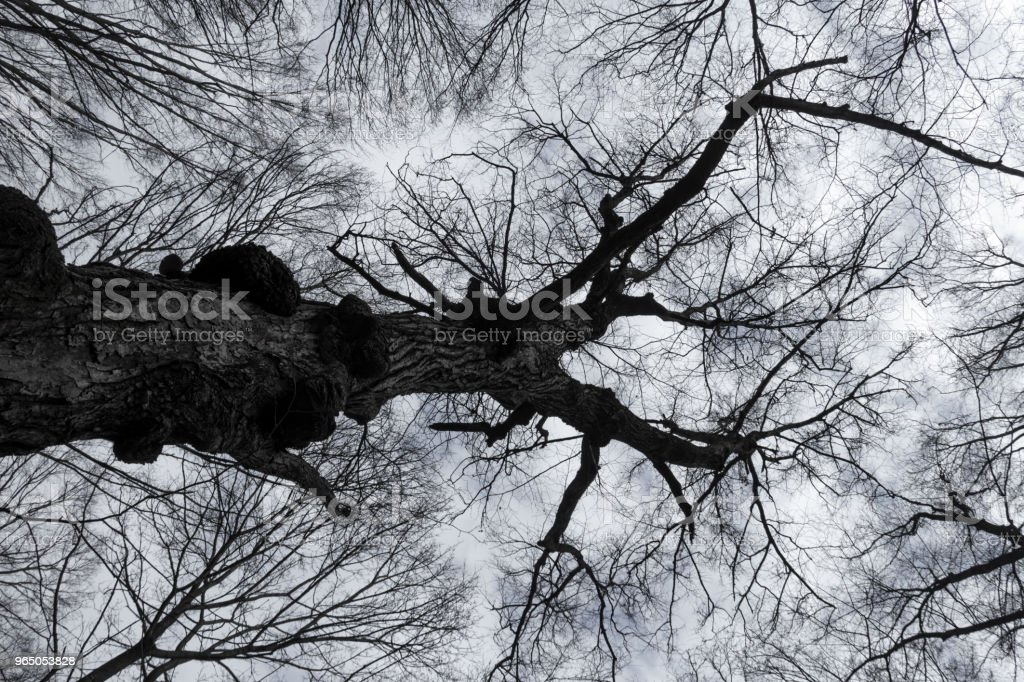 tree silhouette against the sky royalty-free stock photo