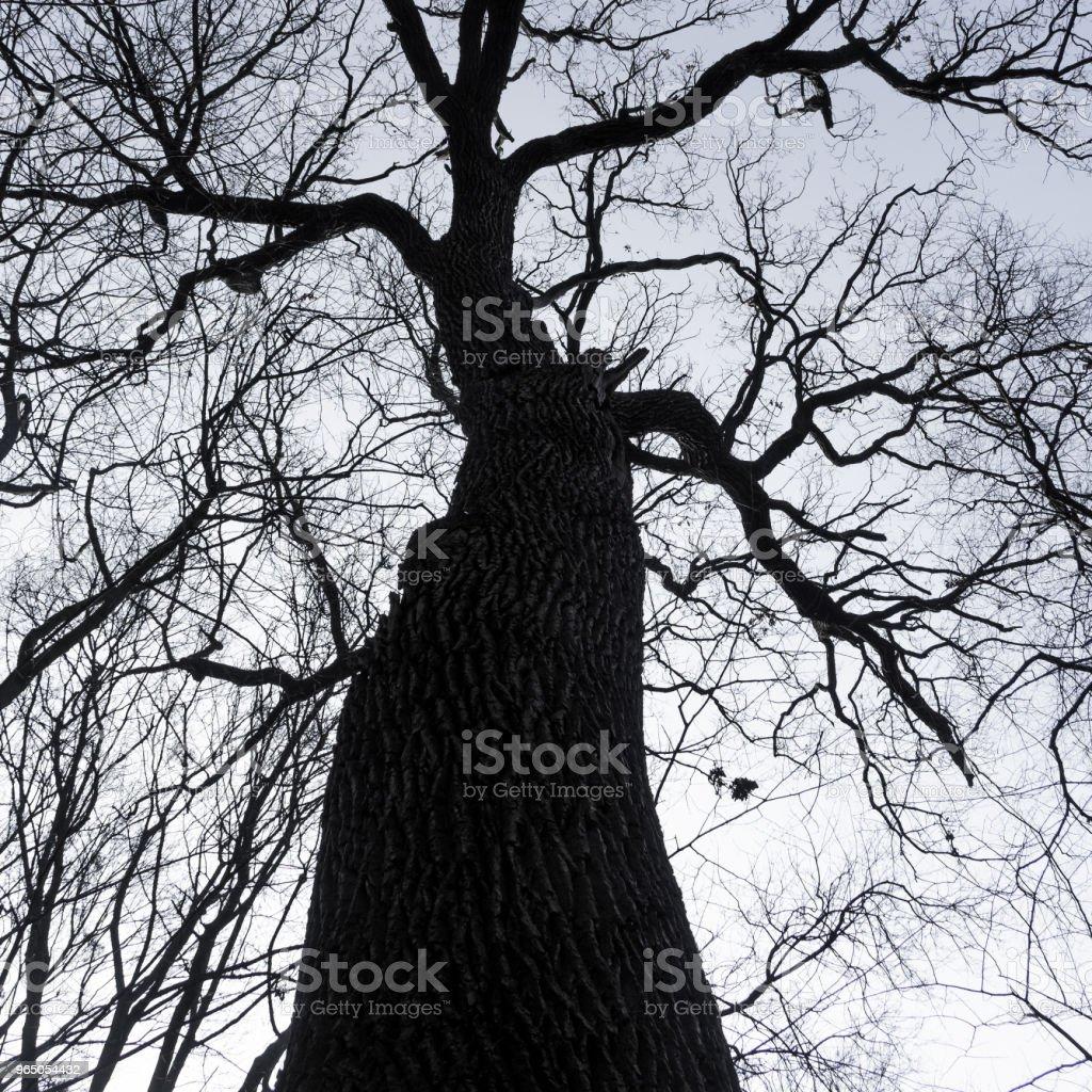 tree silhouette against the sky zbiór zdjęć royalty-free