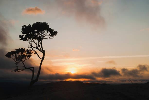 Silhueta da árvore ao nascer do sol no Brasil - foto de acervo