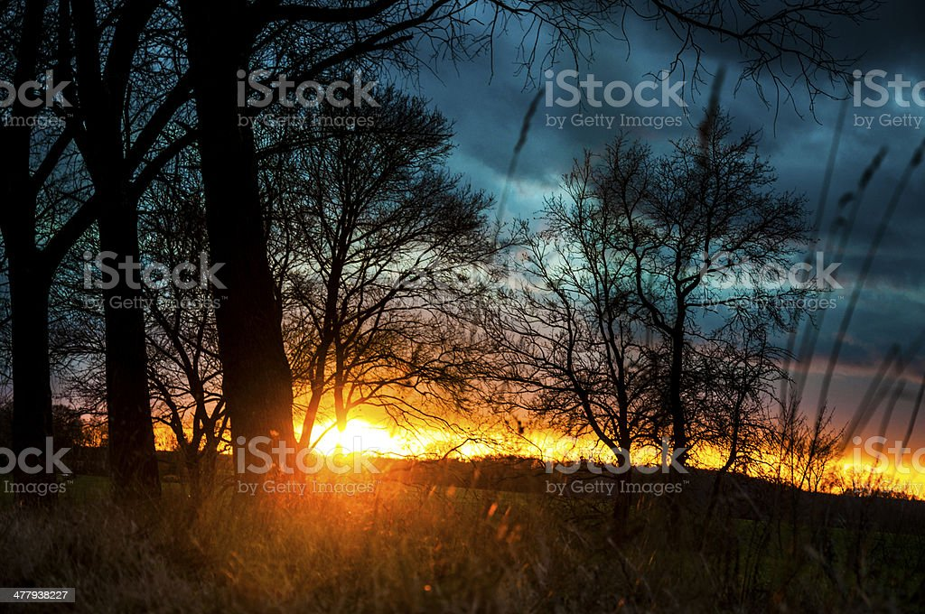 Tree silhouette during sunset royalty-free stock photo