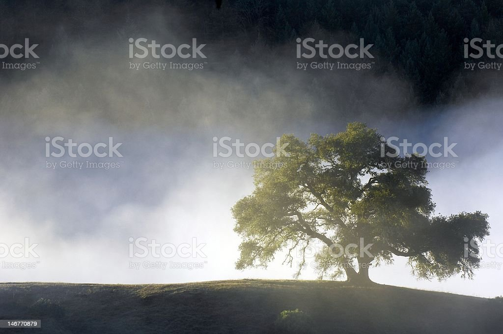 Tree silhouette in Fog royalty-free stock photo