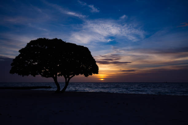 Tree Silhouette on Beach stock photo