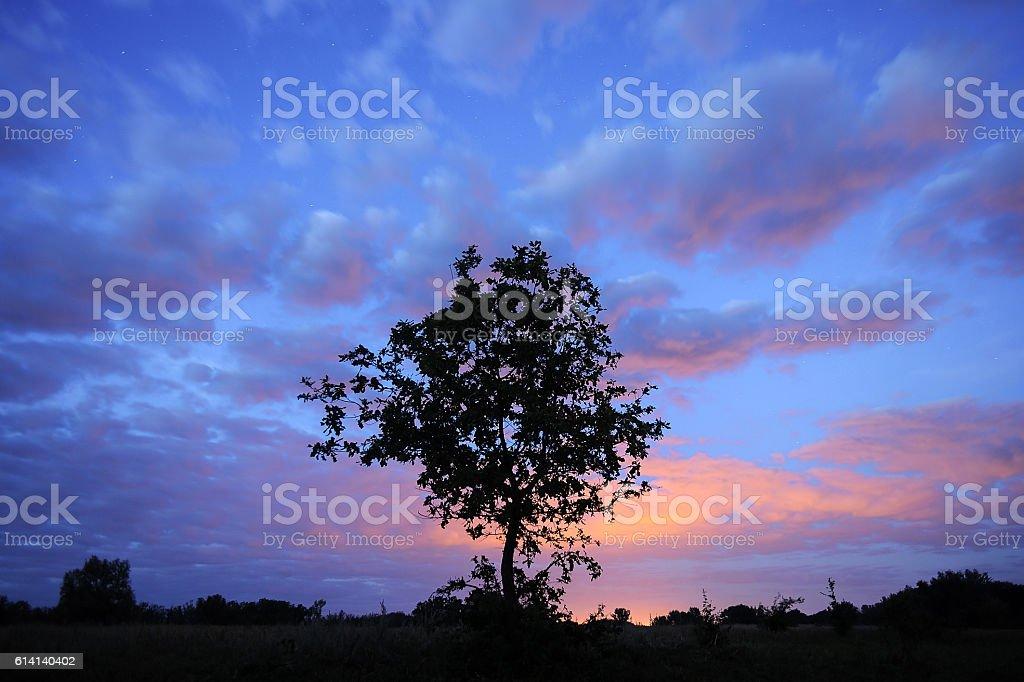 Tree silhouette on starry sky. stock photo