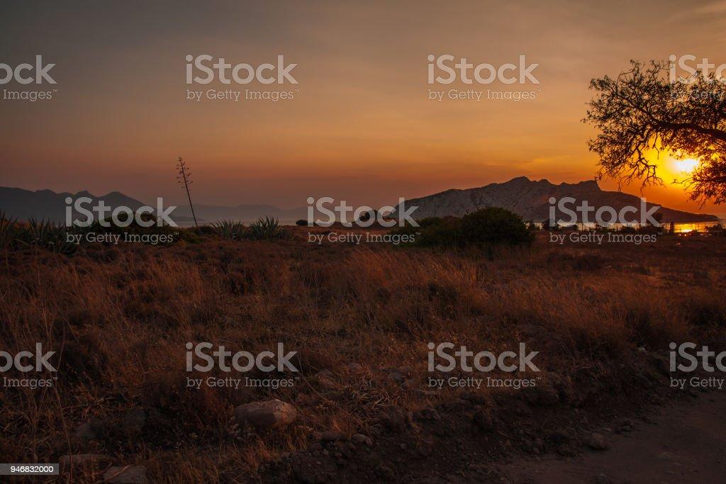Tree silhouette on sunset background, Aegina, Greece stock photo