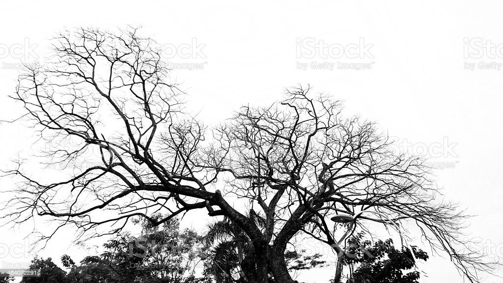 Tree silhouette . stock photo