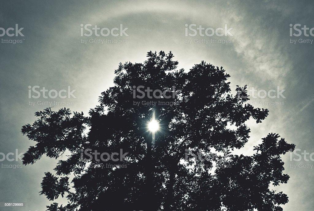 Baum silhouette. – Foto