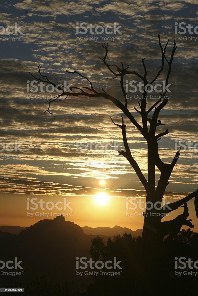 Tree Silhouette Sunrise Grand Canyon stock photo