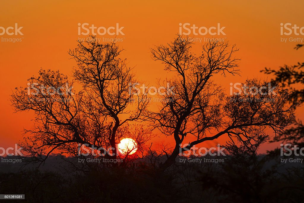 Tree silhouetted against a colorful sky 6 stock photo