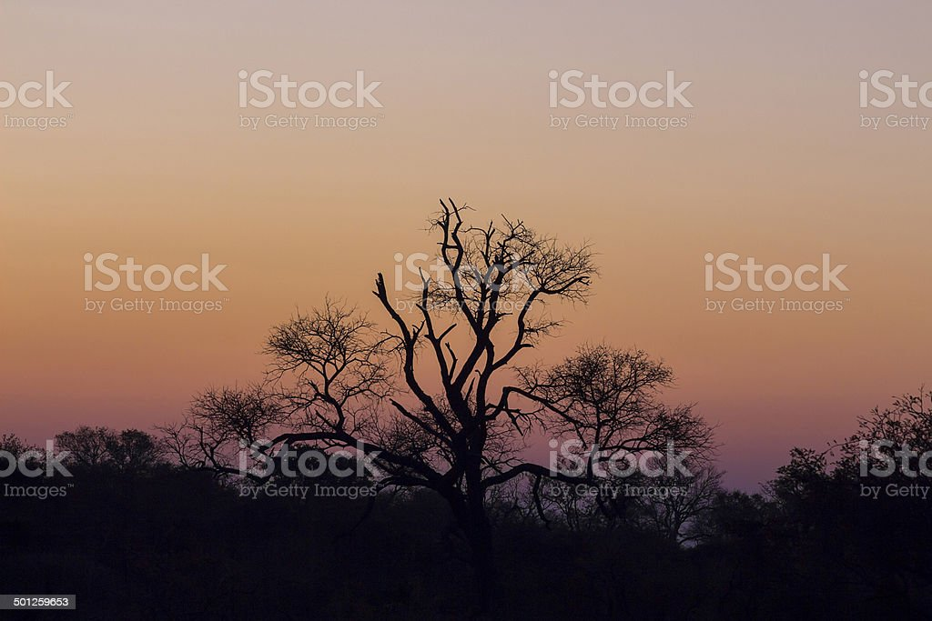 Tree silhouetted against a colorful sky stock photo