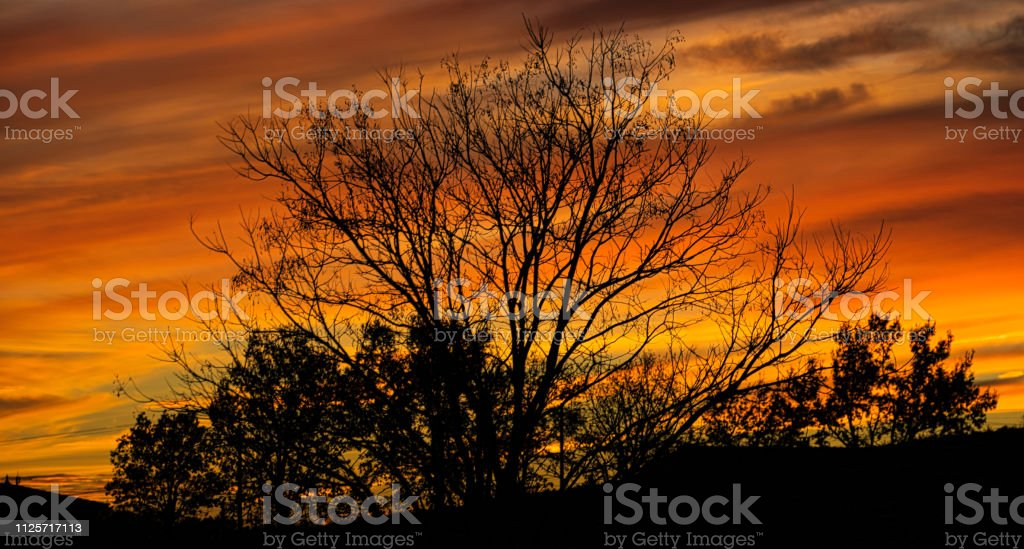 Tree silhouetted against a flaming evening sky stock photo
