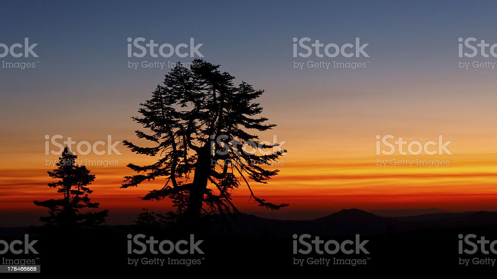 Tree Silhouetted against Sunset stock photo