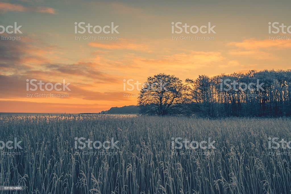 Tree silhouettes in the winter sunrise stock photo
