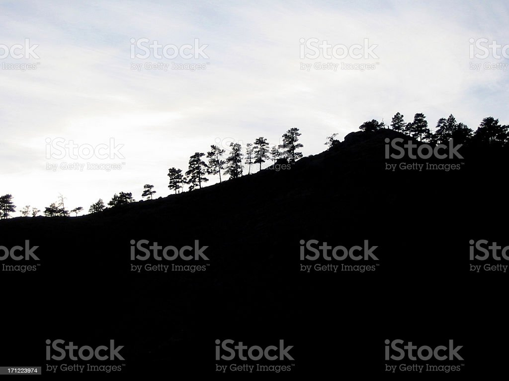 Tree Silhouettes stock photo