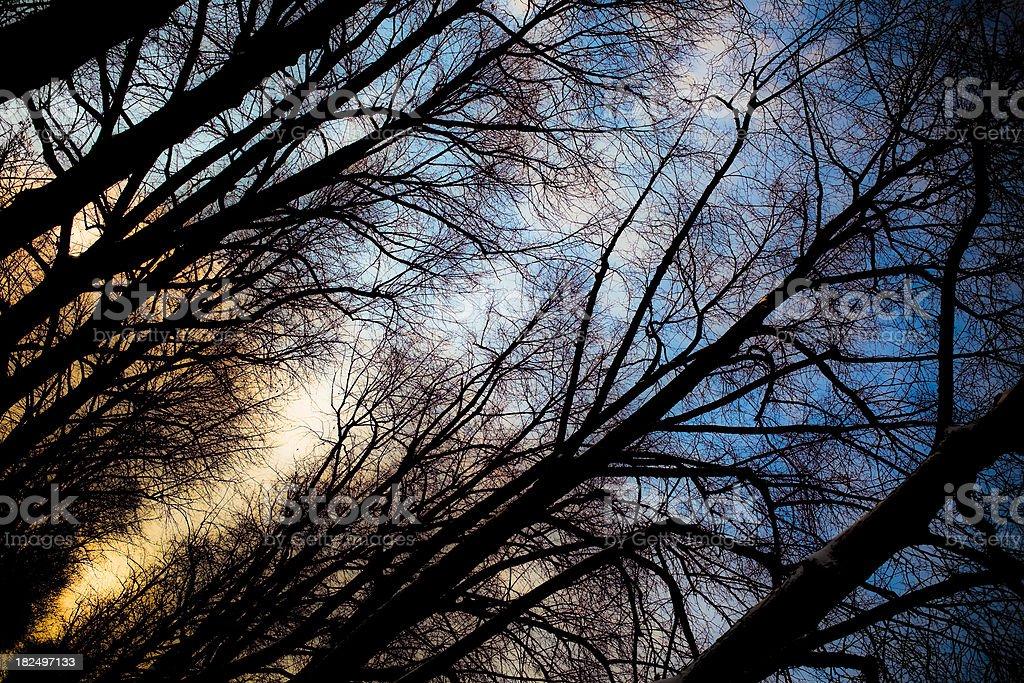 tree silhouettes royalty-free stock photo