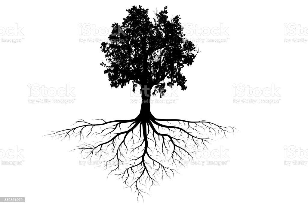 tree silhouettes stock photo