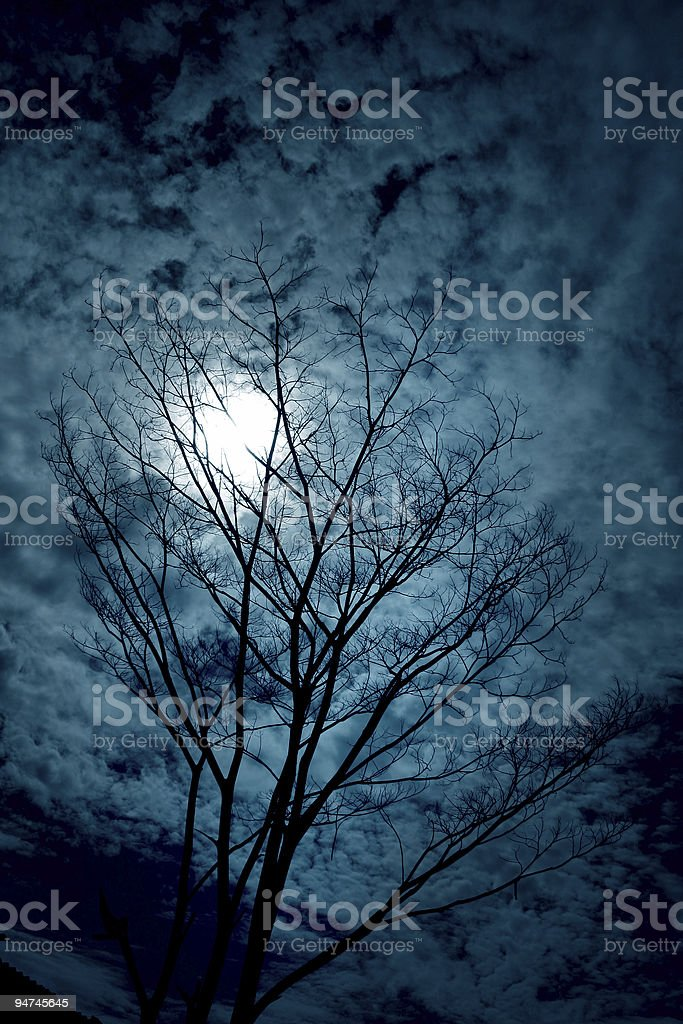 Tree Silhouettes with sky and clouds royalty-free stock photo