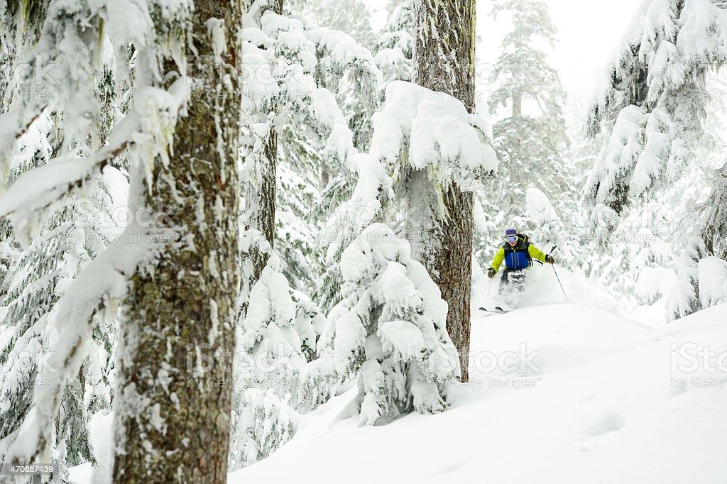 Tree Skiing royalty-free stock photo