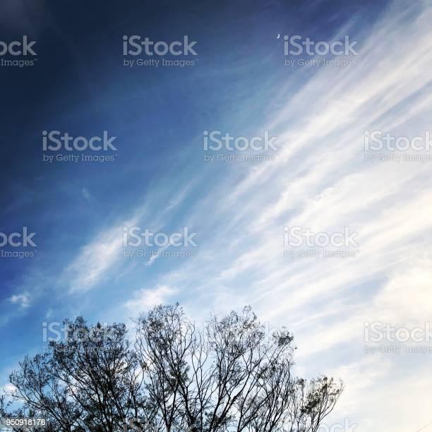 Photo of tree, sky and moon