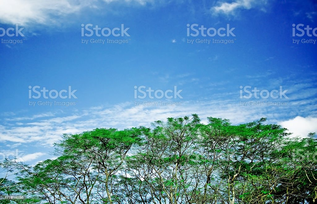 tree sky on the nature royalty-free stock photo