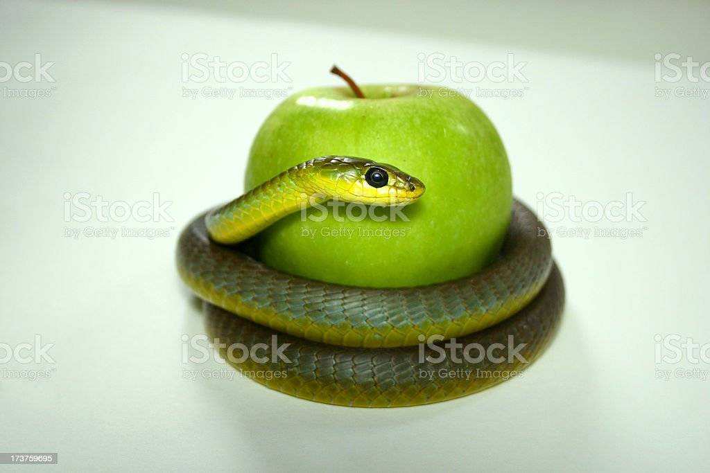 tree snake coiled around a green apple royalty-free stock photo