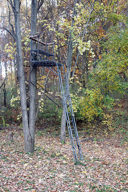 Tree Stand Tree stand in the woods used for hunting hunting blind stock pictures, royalty-free photos & images