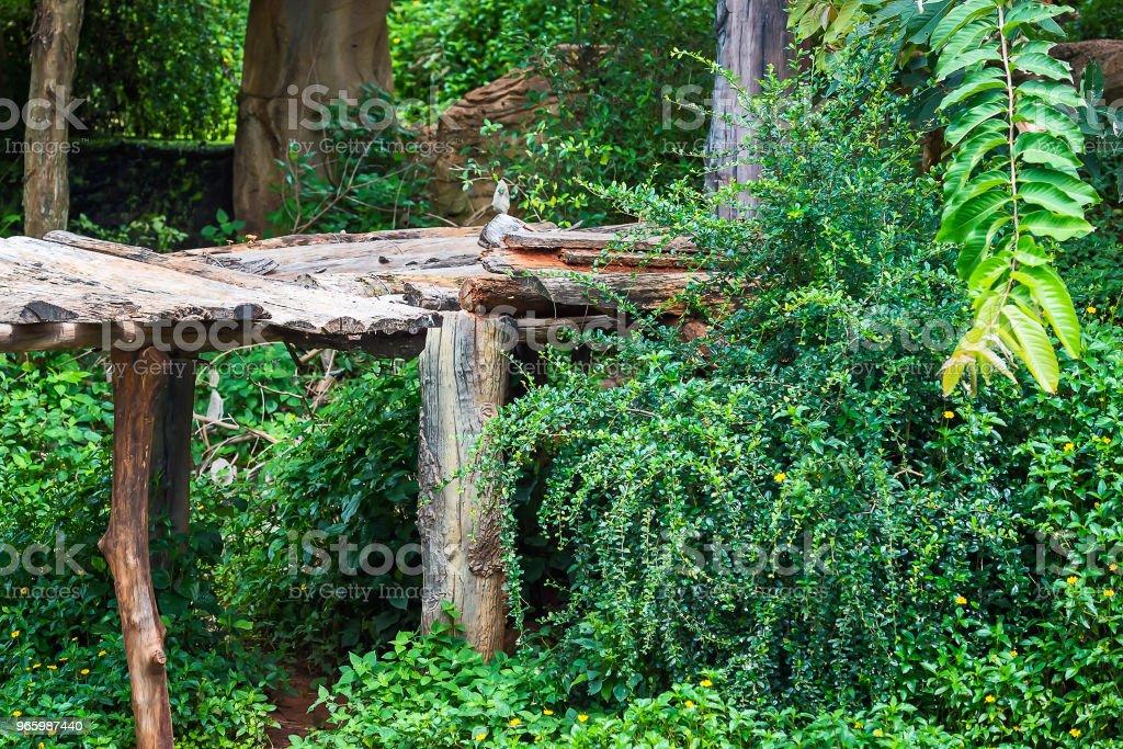 Einem Baumbestand. - Lizenzfrei Baum Stock-Foto
