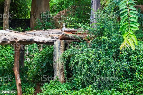 Einem Baumbestand Stockfoto und mehr Bilder von Baum