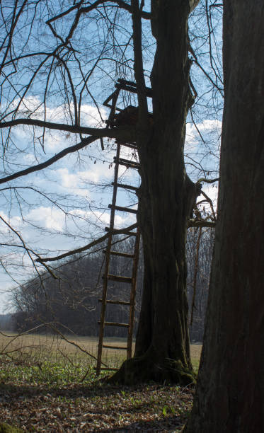 Tree stand with ladder in a forest Tree stand with ladder in a forest. Blue sky with white clouds. hunting blind stock pictures, royalty-free photos & images