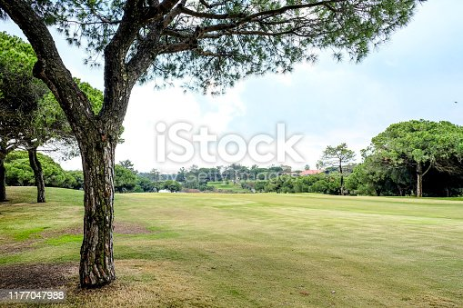 A single tree growing at the side of the fairway in Quinta do Lago, Portugal, showing lush green grass and a panoramic view in the background