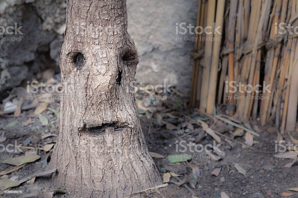 Tree stem looking like a crying face with one teardrop stock photo
