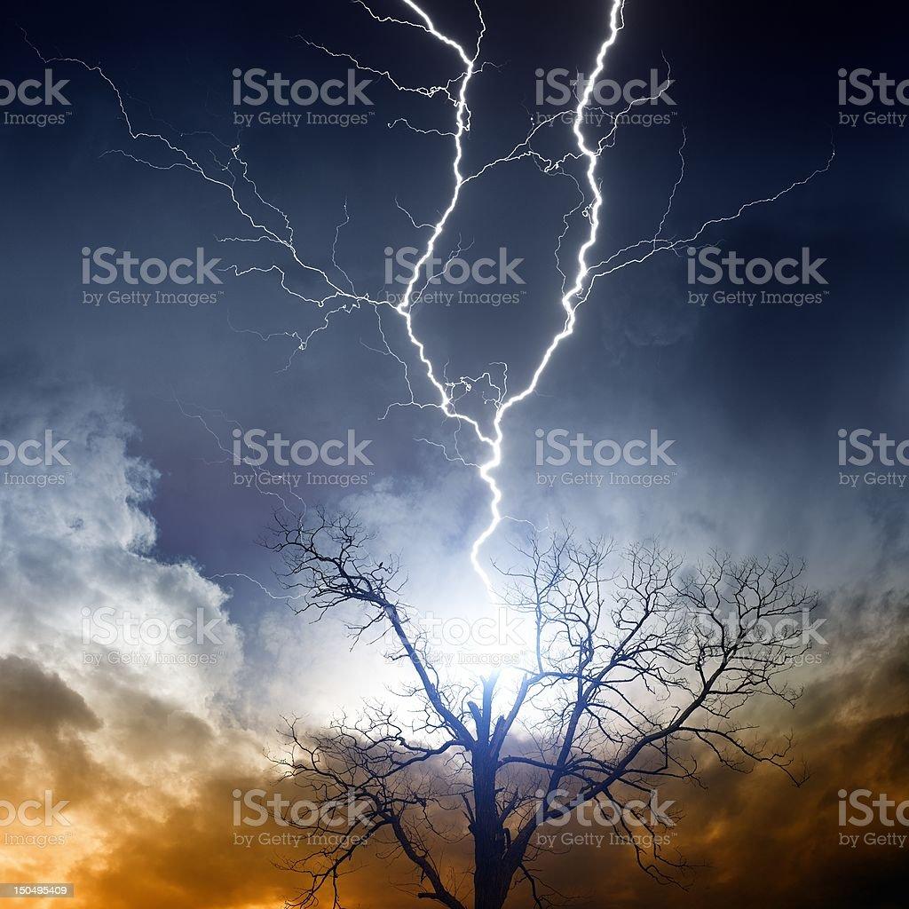 Tree struck by lightning royalty-free stock photo