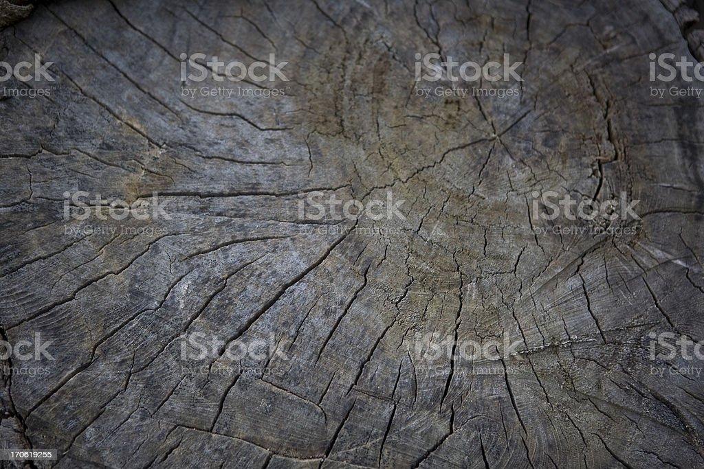 Tree Stump Background royalty-free stock photo