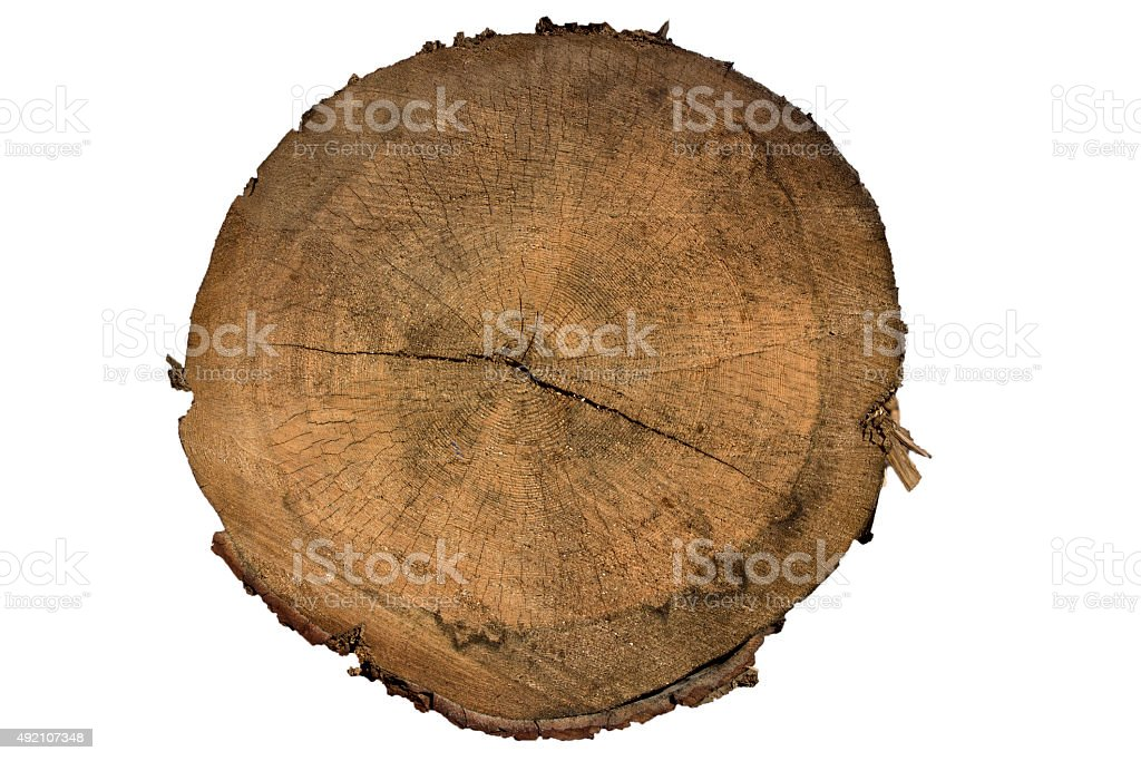 Tree stump background stock photo