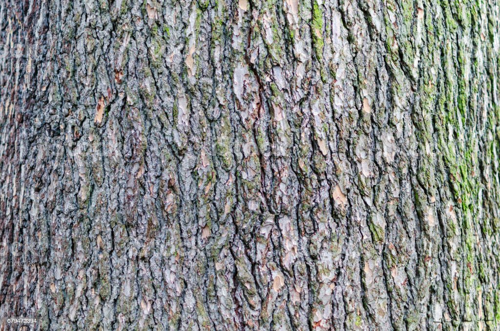 Tree stump bark close-up background with copy space royalty-free stock photo