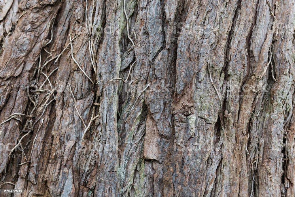 樹的樹樁樹皮特寫背景與副本空間 免版稅 stock photo