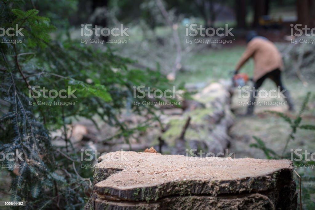 Tree Stump. Cutting Tree. stock photo