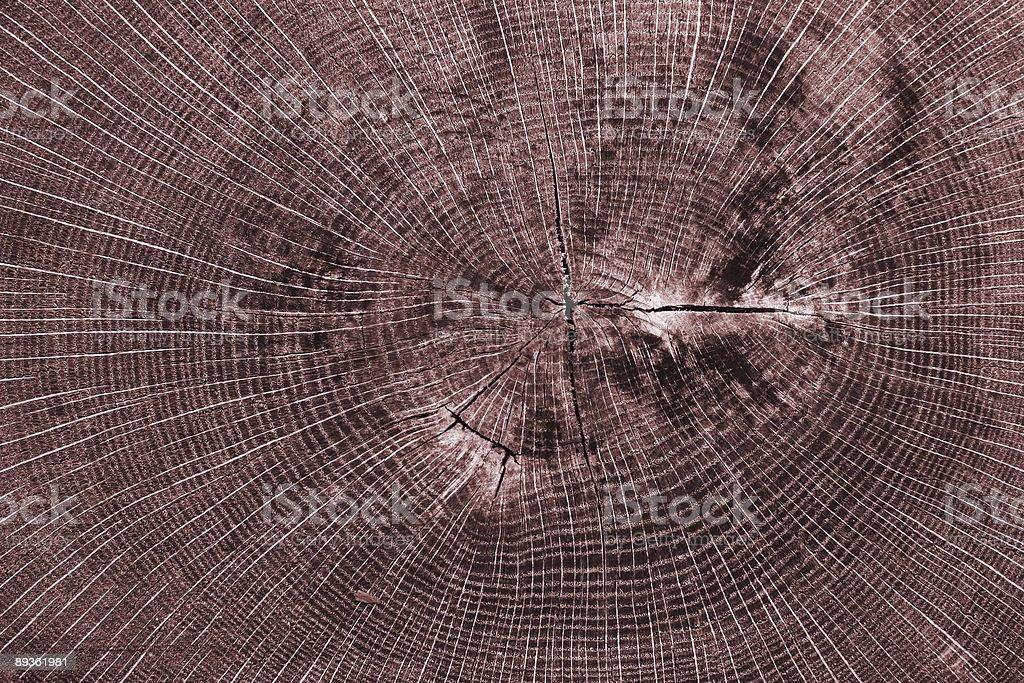 Tree Stump detail Texture Red royaltyfri bildbanksbilder