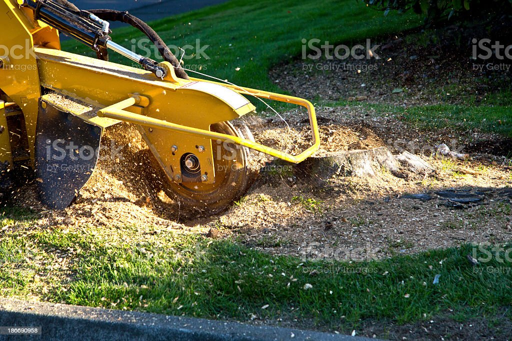Tree Stump Grinding royalty-free stock photo