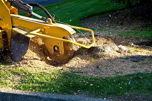 tree stump grinding - boomstronk stockfoto's en -beelden